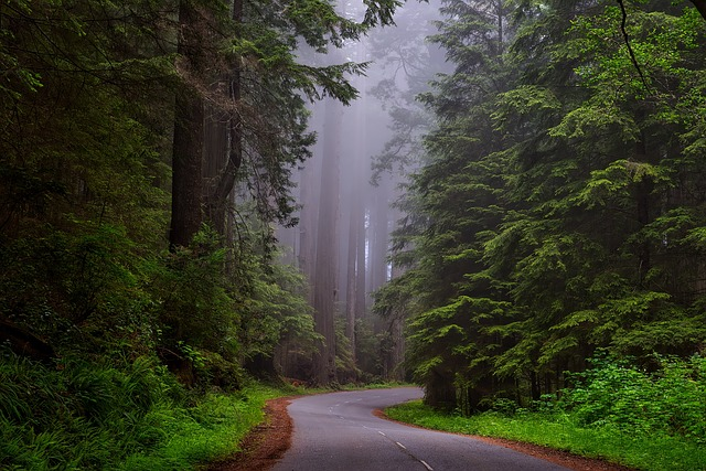 Discover Camping at Redwood National Park, California