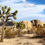 Going to the Joshua Tree National Park, California